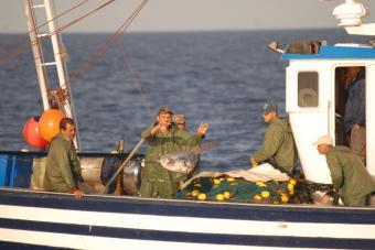 Decenas de millones de animales arrojados por la borda