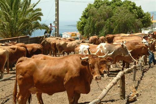 El nuevo sistema de gestión de cadáveres animales en Canarias destruye más de 148.000 kilos en cinco meses
