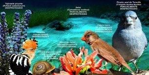 La Defensora del Pueblo admite la queja contra el Catálogo Canario de Especies Protegidas