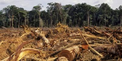 La Amazonía está en serio peligro