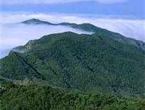 La laurisilva ''evitó que ardiera el norte de La Gomera''