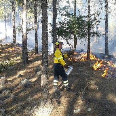 Gran Canaria previene en invierno los incendios forestales